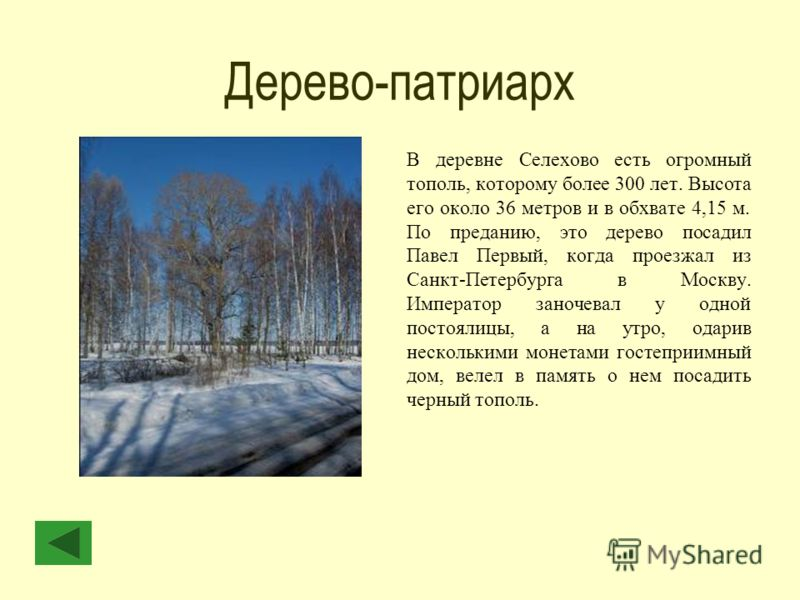 Дерево-патриарх В деревне Селехово есть огромный тополь, которому более 300 лет. Высота его около 36 метров и в обхвате 4,15 м. По преданию, это дерево посадил Павел Первый, когда проезжал из Санкт-Петербурга в Москву. Император заночевал у одной пос