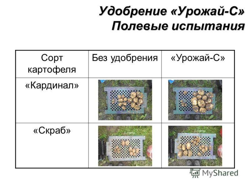 Сорт картофеля Без удобрения«Урожай-С» «Кардинал» «Скраб» Удобрение «Урожай-С» Полевые испытания