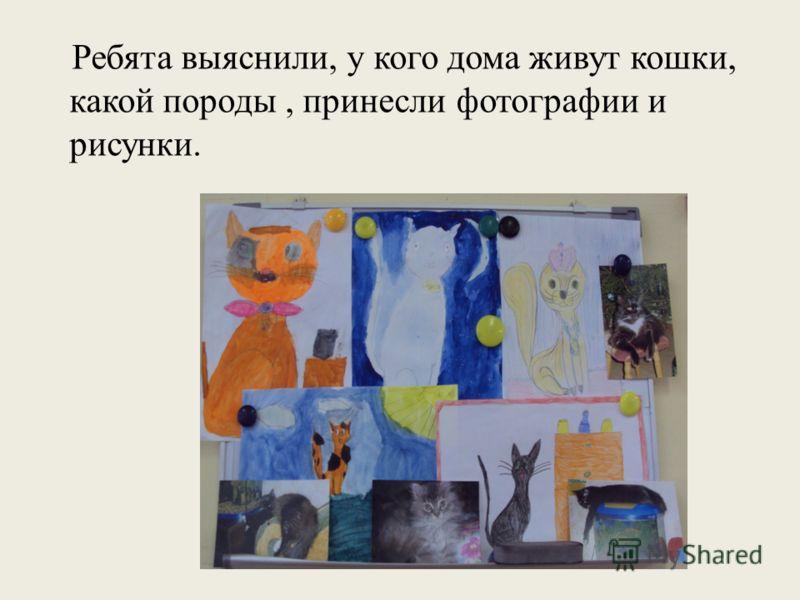 Ребята выяснили, у кого дома живут кошки, какой породы, принесли фотографии и рисунки.
