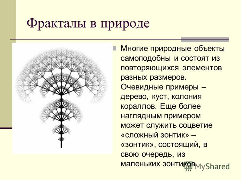 Фракталы в природе Многие природные объекты самоподобны и состоят из повторяющихся элементов разных размеров. Очевидные примеры – дерево, куст, колония кораллов. Еще более наглядным примером может служить соцветие «сложный зонтик» – «зонтик», состоящ