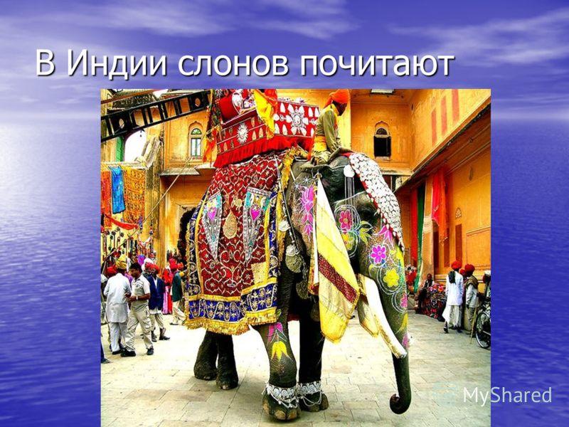 В Индии слонов почитают Картинка с сайта 20 из 11800 Вернуться к результатам поиска Вернуться к результатам поиска
