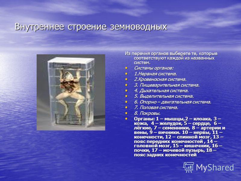 Внутреннее строение земноводных Из перечня органов выберете те, которые соответствуют каждой из названных систем. Системы органов: Системы органов: 1.Нервная система. 1.Нервная система. 2.Кровеносная система. 2.Кровеносная система. 3. Пищеварительная