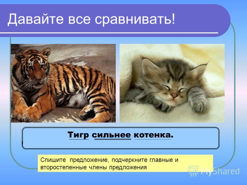 Давайте все сравнивать! Тигр сильнее котенка. Спишите предложение, подчеркните главные и второстепенные члены предложения