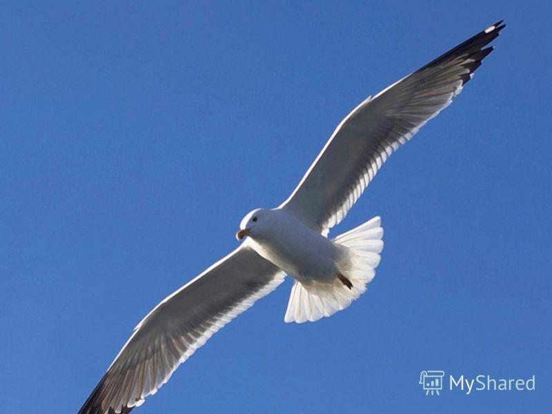 Над волной она летает, Рыбу из воды хватает, Провожает корабли И встречает близ земли. Отгадайте загадку