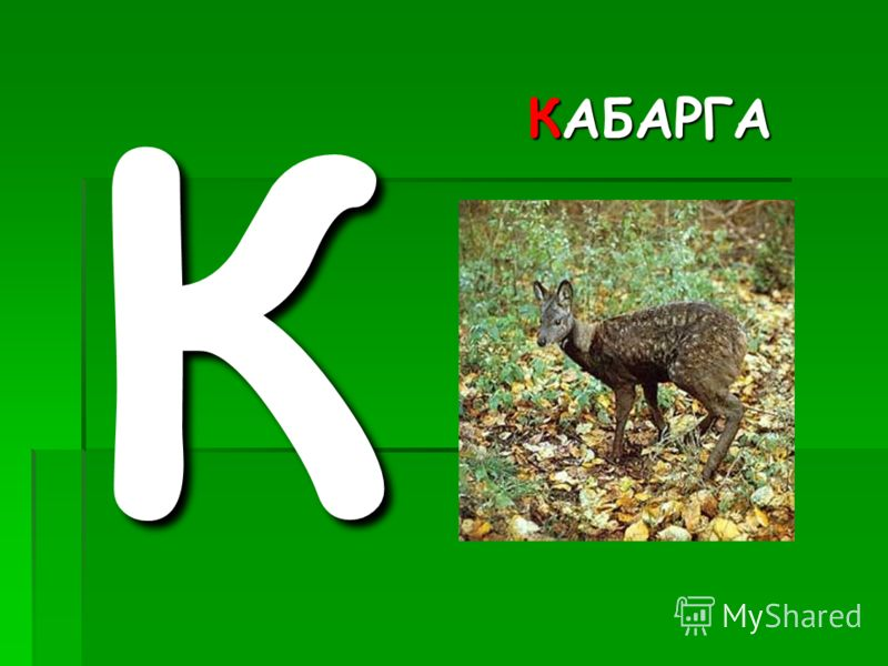 КАБАРГА К