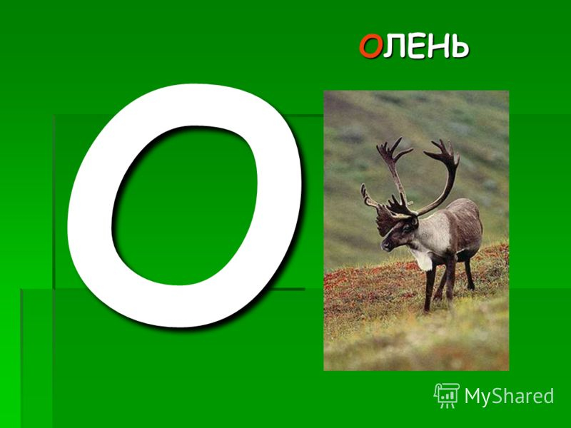 ОЛЕНЬ О