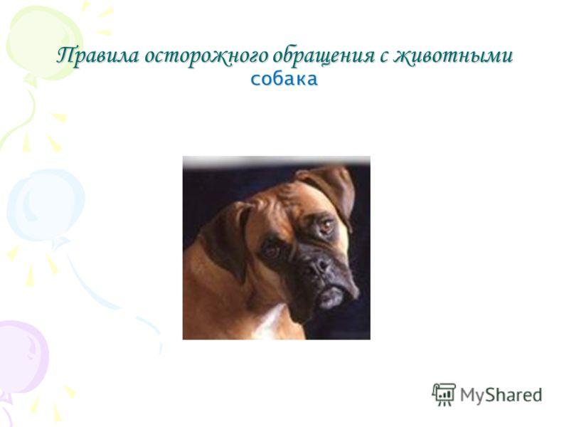 Правила осторожного обращения с животными собака