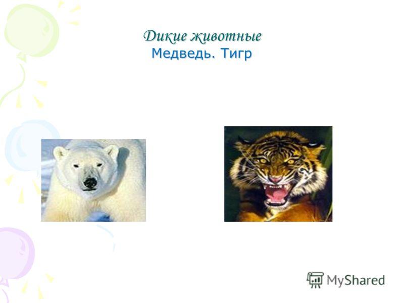 Дикие животные Медведь. Тигр