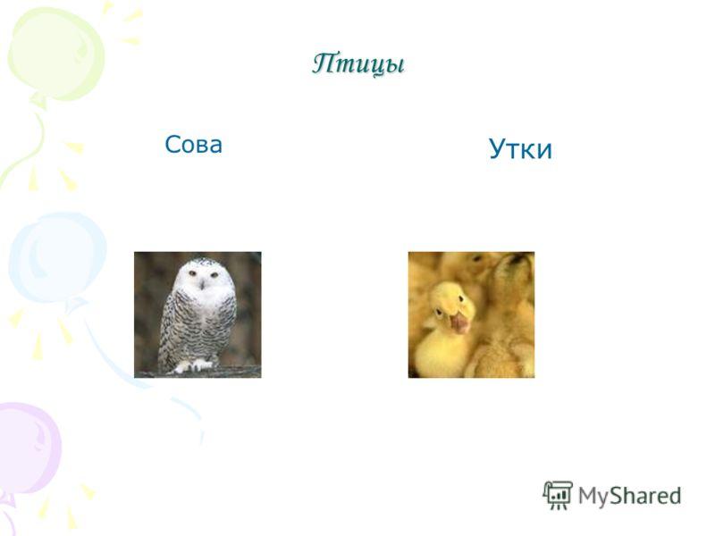 Птицы Сова Утки