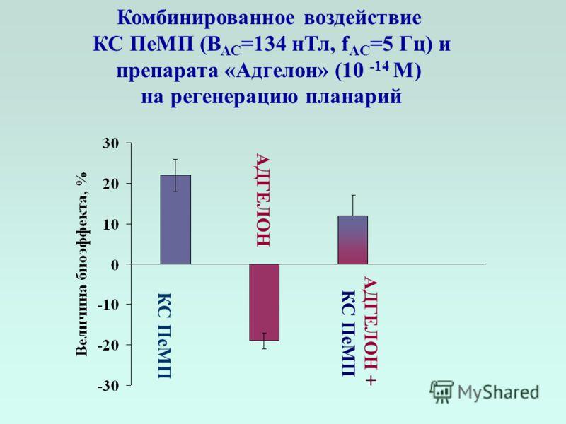 Комбинированное воздействие КС ПеМП (В АС =134 нТл, f AC =5 Гц) и препарата «Адгелон» (10 -14 М) на регенерацию планарий АДГЕЛОН АДГЕЛОН + КС ПеМП