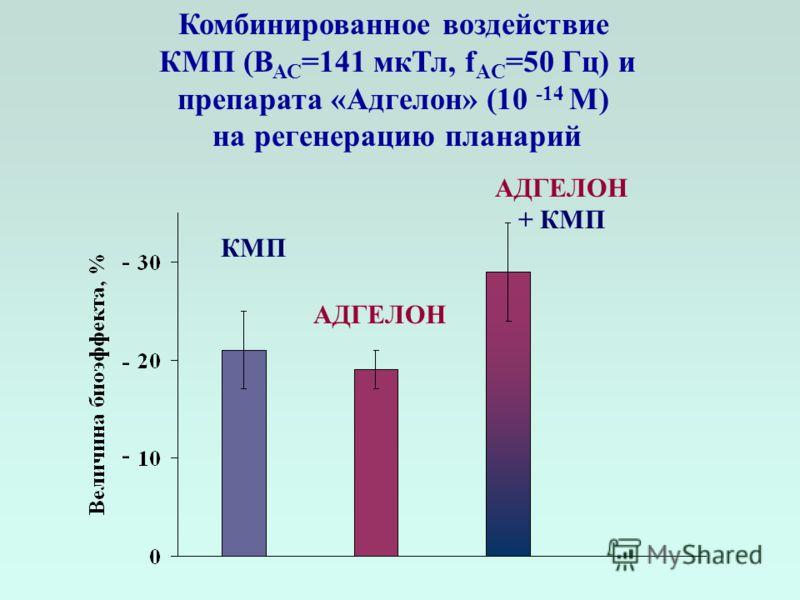 Комбинированное воздействие КМП (В АС =141 мкТл, f AC =50 Гц) и препарата «Адгелон» (10 -14 М) на регенерацию планарий АДГЕЛОН + КМП АДГЕЛОН КМП - - -