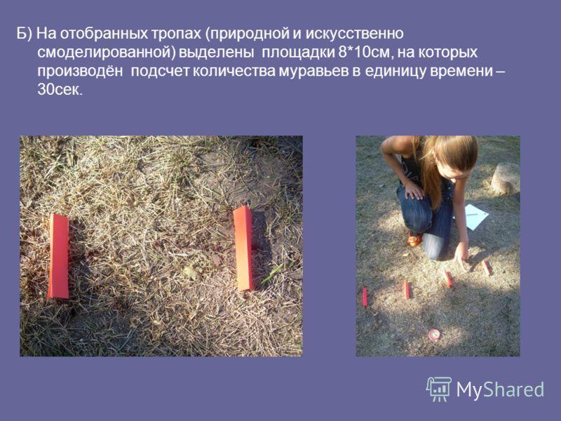 Б) На отобранных тропах (природной и искусственно смоделированной) выделены площадки 8*10см, на которых производён подсчет количества муравьев в единицу времени – 30сек.