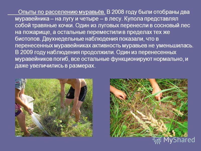 Опыты по расселению муравьёв. В 2008 году были отобраны два муравейника – на лугу и четыре – в лесу. Купола представлял собой травяные кочки. Один из луговых перенесли в сосновый лес на пожарище, а остальные переместили в пределах тех же биотопов. Дв