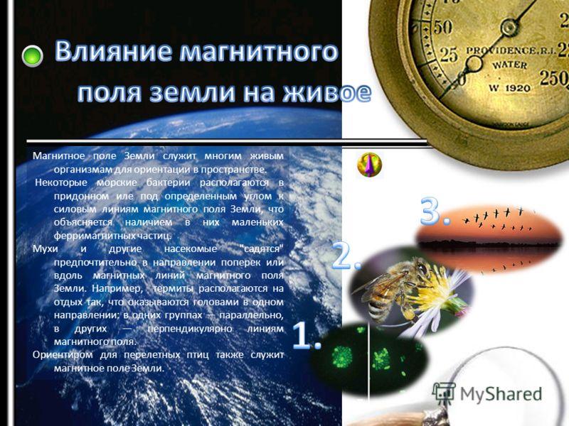 Магнитное поле Земли служит многим живым организмам для ориентации в пространстве. Некоторые морские бактерии располагаются в придонном иле под определенным углом к силовым линиям магнитного поля Земли, что объясняется наличием в них маленьких феррим