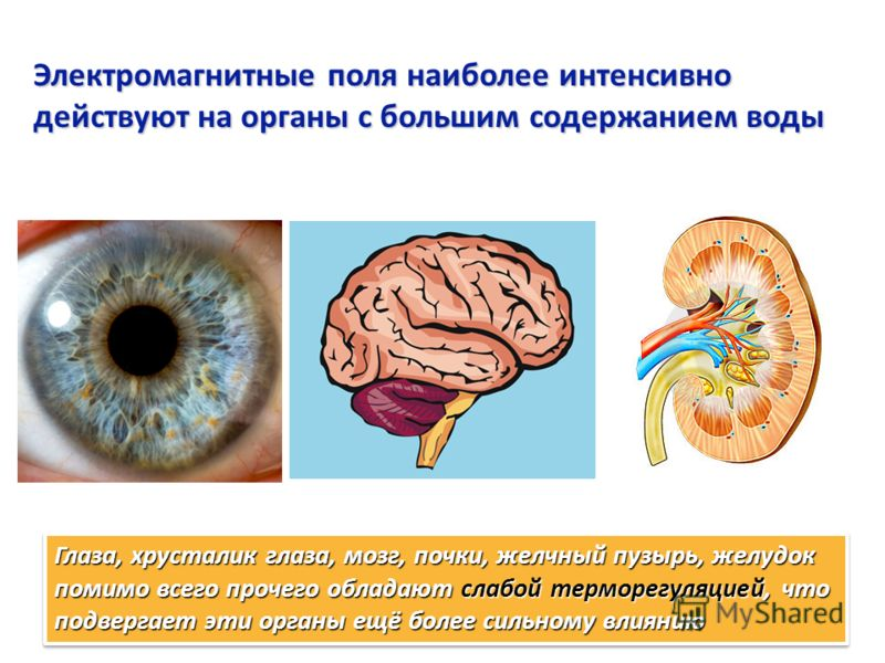 Электромагнитные поля наиболее интенсивно действуют на органы с большим содержанием воды Глаза, хрусталик глаза, мозг, почки, желчный пузырь, желудок помимо всего прочего обладают слабой терморегуляцией, что подвергает эти органы ещё более сильному в