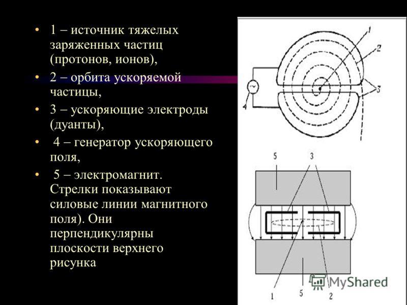 1 источник тяжелых заряженных частиц (протонов, ионов), 2 орбита ускоряемой частицы, 3 ускоряющие электроды (дуанты), 4 генератор ускоряющего поля, 5 электромагнит. Стрелки показывают силовые линии магнитного поля). Они перпендикулярны плоскости верх
