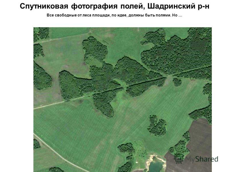 Спутниковая фотография полей, Шадринский р-н Все свободные от леса площади, по идее, должны быть полями. Но …