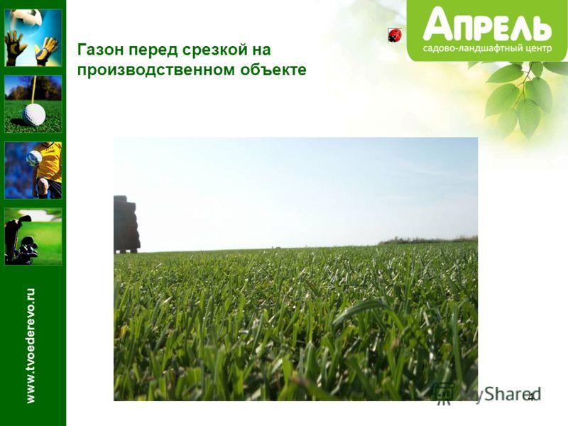 4 Газон перед срезкой на производственном объекте www.tvoederevo.ru