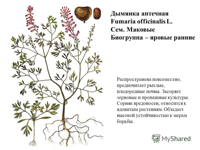 Дымянка аптечная Fumaria officinalis L. Сем. Маковые Биогруппа – яровые ранние Распространена повсеместно, предпочитает рыхлые, плодородные почвы. Засоряет зерновые и пропашные культуры. Сорняк вредоносен, относится к ядовитым растениям. Обладает выс
