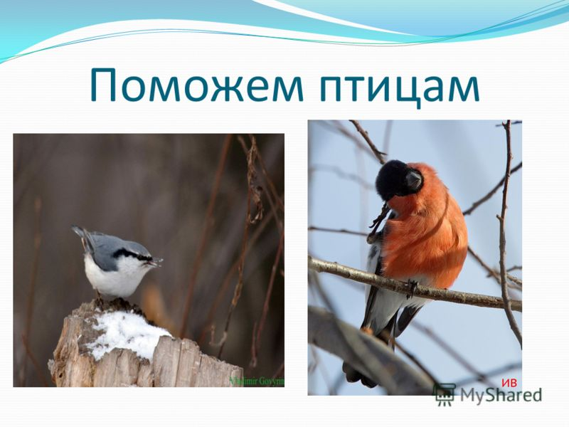 Отношение к птицам зимой Я думаю, что все хорошо понимают, как жизненно необходима птицам зимой наша помощь, как тяжело им приходится в морозы без еды и тепла. И чтобы помочь им пережить это трудный период, им нужно сделать всего-то так немного – поз
