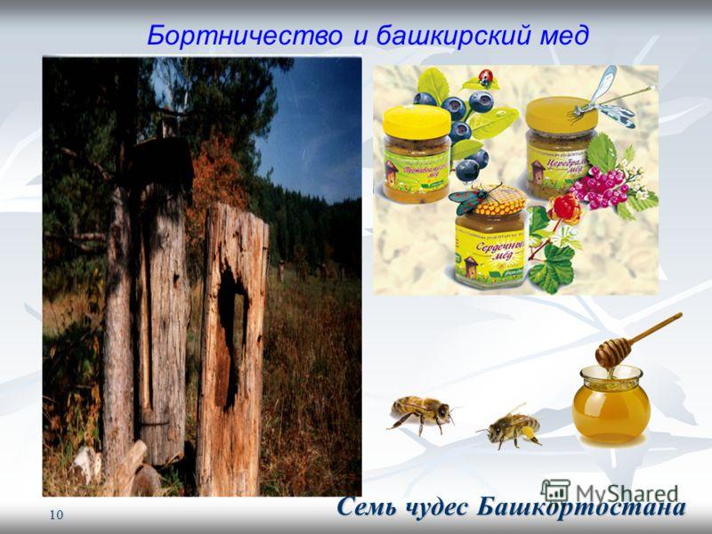 10 Бортничество и башкирский мед Семь чудес Башкортостана Семь чудес Башкортостана