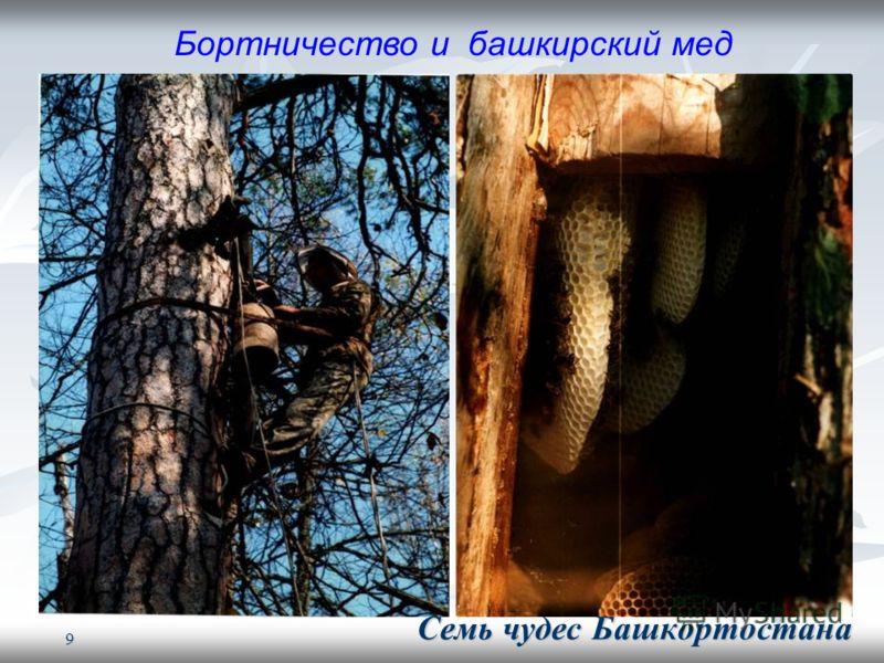 9 Бортничество и башкирский мед Семь чудес Башкортостана Семь чудес Башкортостана