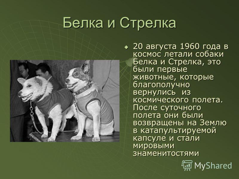 Белка и Стрелка 20 августа 1960 года в космос летали собаки Белка и Стрелка, это были первые животные, которые благополучно вернулись из космического полета. После суточного полета они были возвращены на Землю в катапультируемой капсуле и стали миров