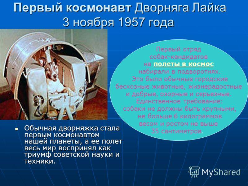 Первый космонавт Дворняга Лайка 3 ноября 1957 года Первый космонавт Дворняга Лайка 3 ноября 1957 года Обычная дворняжка стала первым космонавтом нашей планеты, а ее полет весь мир воспринял как триумф советской науки и техники. Обычная дворняжка стал