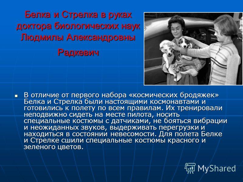 Белка и Стрелка в руках доктора биологических наук Людмилы Александровны Радкевич В отличие от первого набора «космических бродяжек» Белка и Стрелка были настоящими космонавтами и готовились к полету по всем правилам. Их тренировали неподвижно сидеть