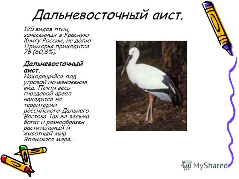 Дальневосточный аист. 125 видов птиц, занесенных в Красную Книгу России, на долю Приморья приходится 76 (60,8%). Дальневосточный аист. Находящийся под угрозой исчезновения вид. Почти весь гнездовой ареал находится на территории российского Дальнего В