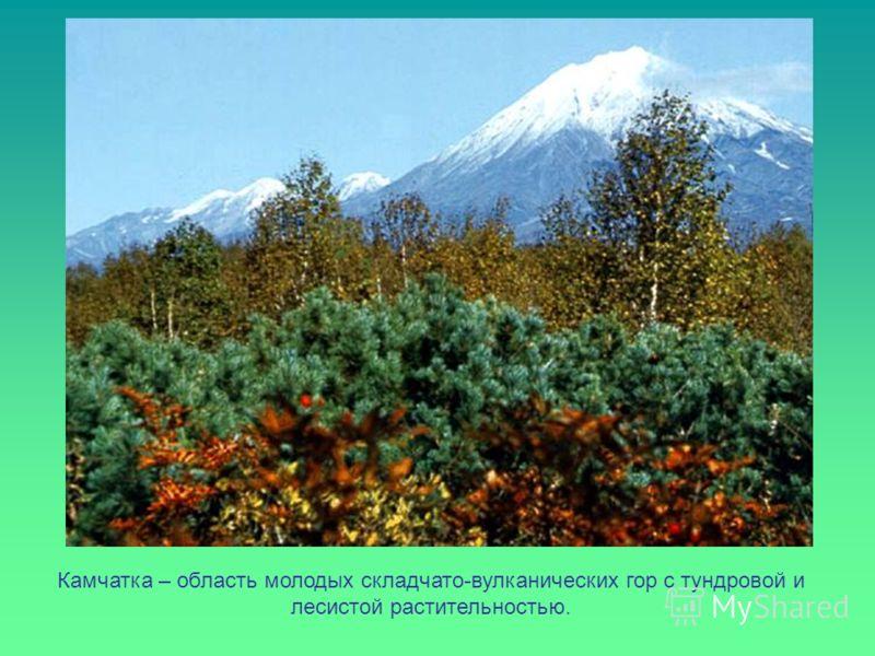 Камчатка – область молодых складчато-вулканических гор с тундровой и лесистой растительностью.