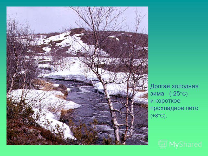 Долгая холодная зима (-25 °С) и короткое прохладное лето (+8°С).