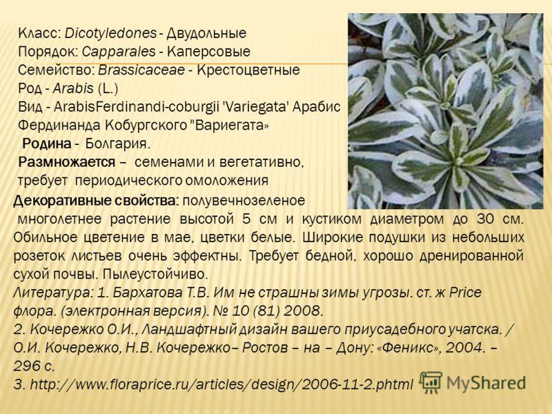 Класс: Dicotyledones - Двудольные Порядок: Capparales - Каперсовые Семейство: Brassicaceae - Крестоцветные Род - Arabis (L.) Вид - ArabisFerdinandi-coburgii 'Variegata' Арабис Фердинанда Кобургского