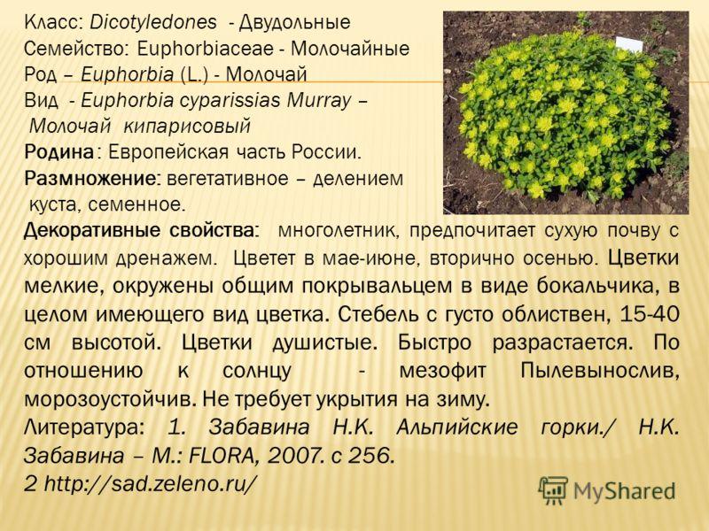 Класс: Dicotyledones - Двудольные Семейство: Euphorbiaceae - Молочайные Род – Euphorbia (L.) - Молочай Вид - Euphorbia cyparissias Murray – Молочай кипарисовый Родина : Европейская часть России. Размножение: вегетативное – делением куста, семенное. Д
