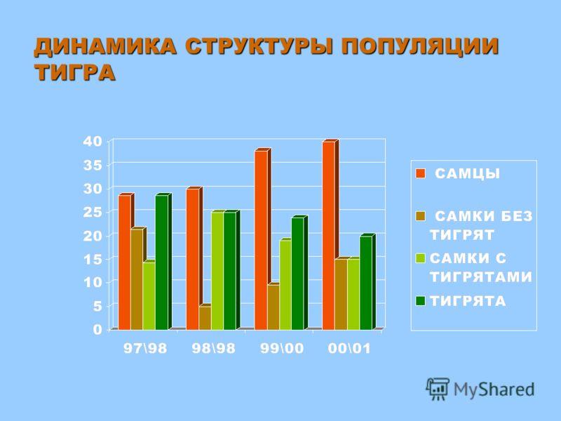 Численность тигра в Хабаровском крае.