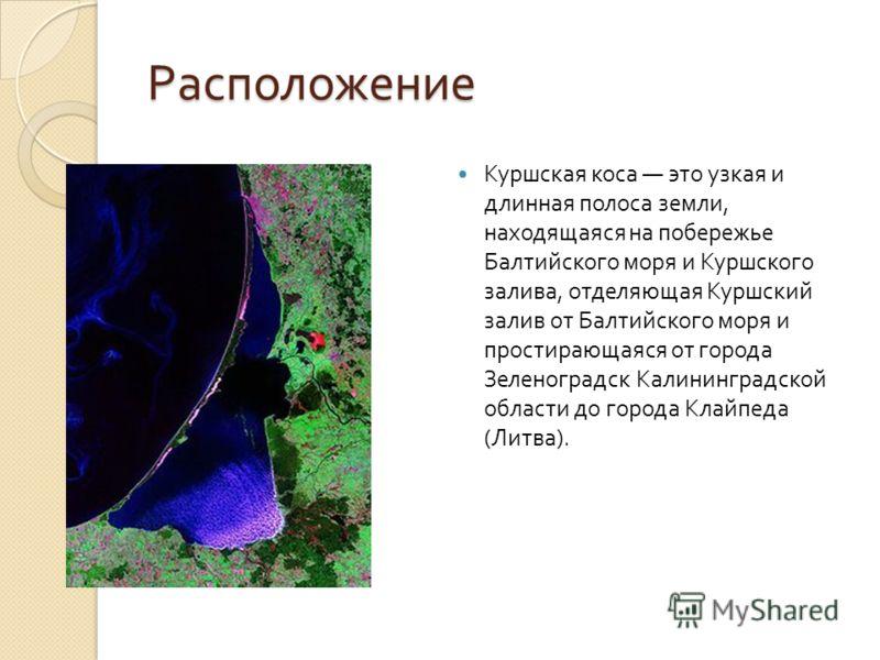 Расположение Куршская коса это узкая и длинная полоса земли, находящаяся на побережье Балтийского моря и Куршского залива, отделяющая Куршский залив от Балтийского моря и простирающаяся от города Зеленоградск Калининградской области до города Клайпед