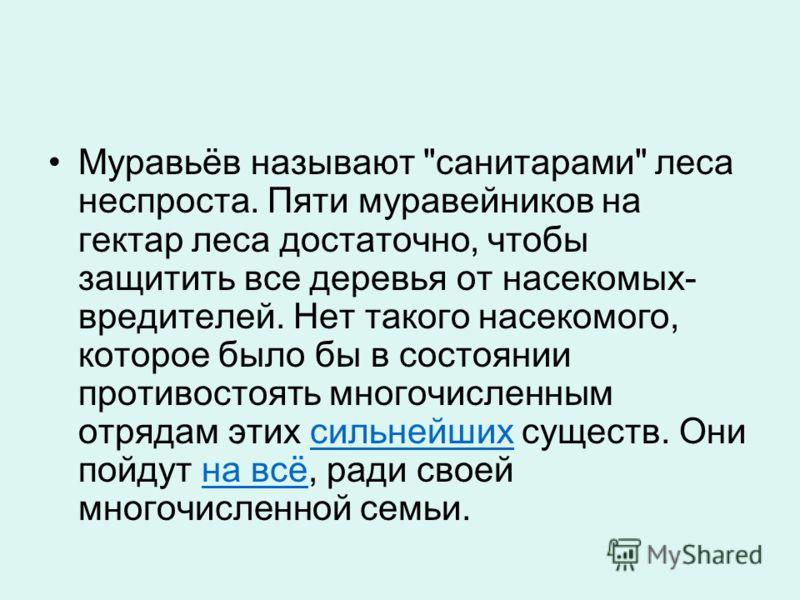 Муравьёв называют