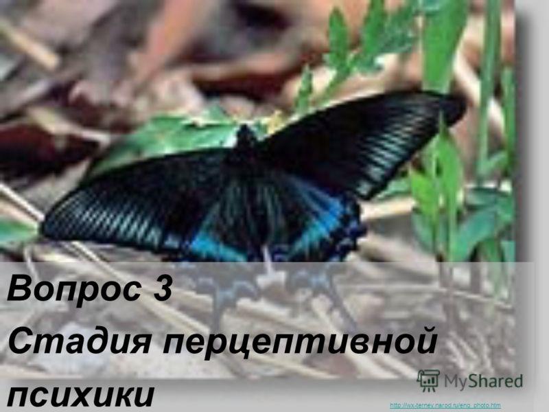 Вопрос 3 Стадия перцептивной психики http://wx-terney.narod.ru/eng_photo.htm