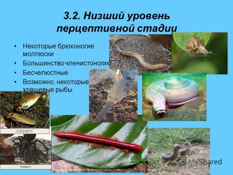 3.2. Низший уровень перцептивной стадии Некоторые брюхоногие моллюски Большинство членистоногих Бесчелюстные Возможно, некоторые хрящевые рыбы