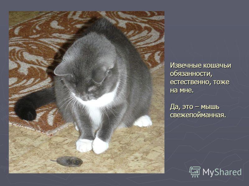 Извечные кошачьи обязанности, естественно, тоже на мне. Да, это – мышь свежепойманная.