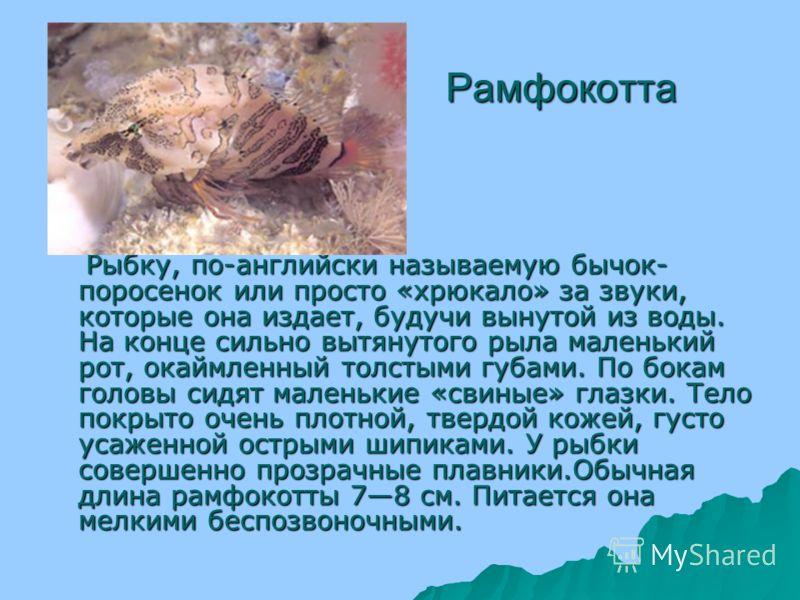 Лопатонос Лопатонос. Речная рыба, весом до 23, редко до 4,4 кг и длиной до 60 90 см, редко до 130 см; характеризуются очень длинным уплощенным хвостовым стеблем, одетым, как панцирем, костными пластинками; плавательный пузырь большой. Глаза маленькие