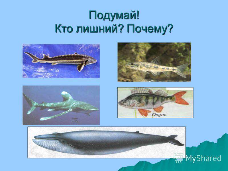 Летучие рыбы Окраска летучих рыб вполне типична для обитателей приповерхностного слоя открытого моря: спинка у них темно-синего цвета, а нижняя часть тела серебристая. Очень разнообразна окраска грудных плавников, которые могут быть как однотонными (