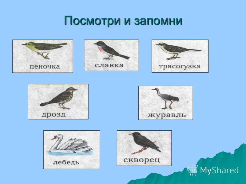 Чем похожи и чем отличаются грач и воробей? Грач и воробей – птицы. У всех птиц 2 крыла и 2 ноги. Тело птиц покрыто перьями. Каких птиц вы знаете ещё? Посмотри и назови части тела грача.