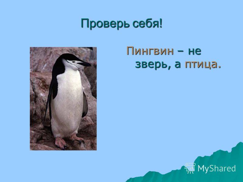 Подумай! Какое животное лишнее? Почему?