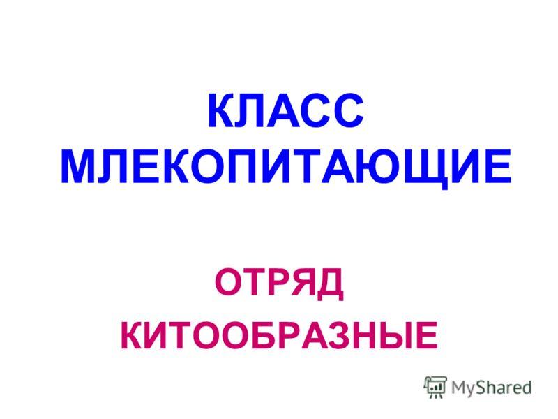 КЛАСС МЛЕКОПИТАЮЩИЕ ОТРЯД КИТООБРАЗНЫЕ