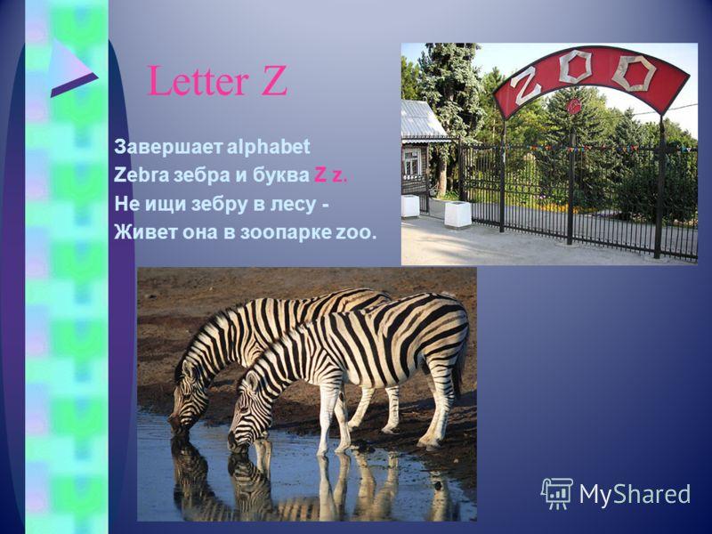 Letter Z Завершает alphabet Zebra зебра и буква Z z. Не ищи зебру в лесу - Живет она в зоопарке zoo.