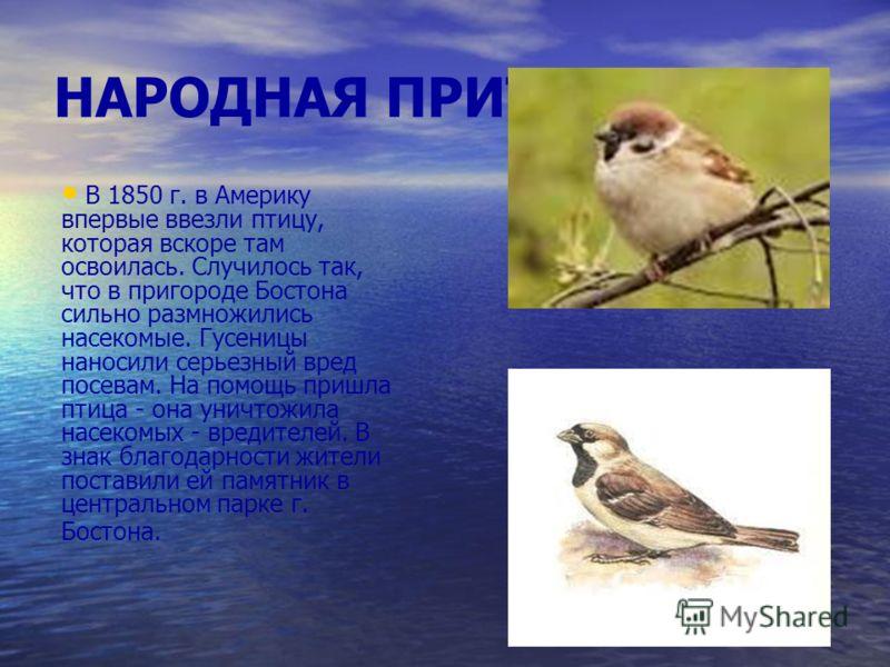НАРОДНАЯ ПРИТЧА: В 1850 г. в Америку впервые ввезли птицу, которая вскоре там освоилась. Случилось так, что в пригороде Бостона сильно размножились насекомые. Гусеницы наносили серьезный вред посевам. На помощь пришла птица - она уничтожила насекомых