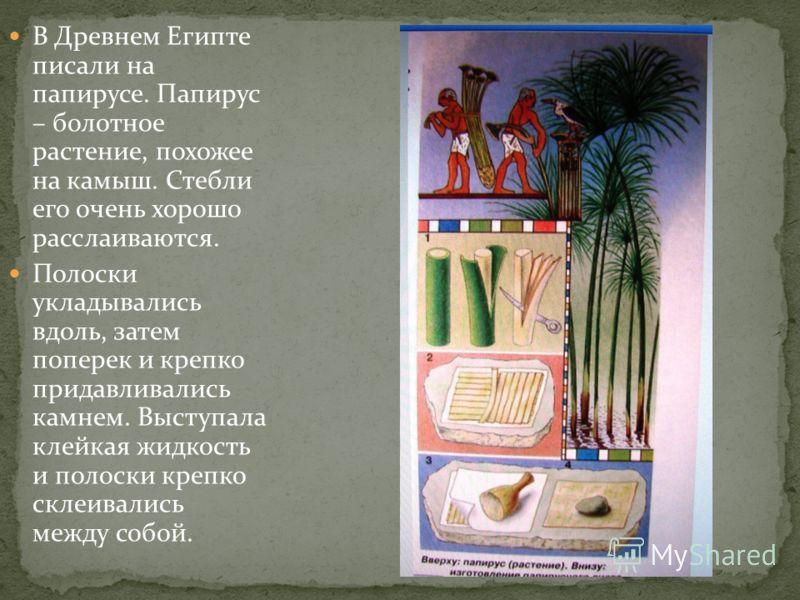 В Древнем Египте писали на папирусе. Папирус – болотное растение, похожее на камыш. Стебли его очень хорошо расслаиваются. Полоски укладывались вдоль, затем поперек и крепко придавливались камнем. Выступала клейкая жидкость и полоски крепко склеивали