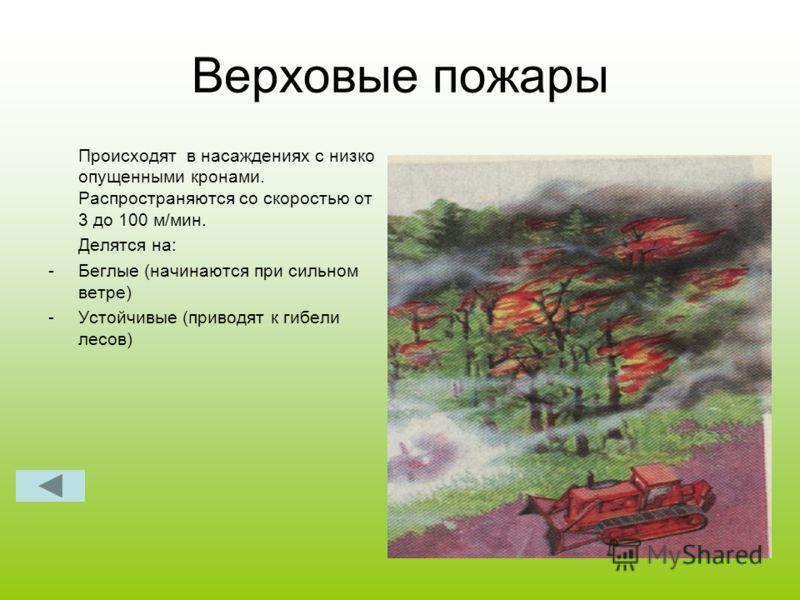 Верховые пожары Происходят в насаждениях с низко опущенными кронами. Распространяются со скоростью от 3 до 100 м/мин. Делятся на: -Беглые (начинаются при сильном ветре) -Устойчивые (приводят к гибели лесов)