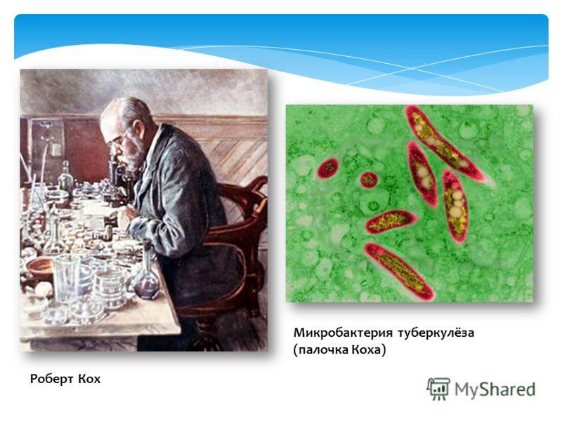 Роберт Кох Микробактерия туберкулёза (палочка Коха)